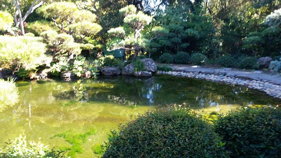 Hayward, CA: Fish pond