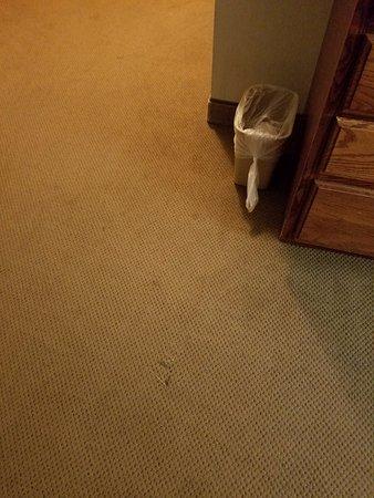 Rhinelander, WI: Disgusting Carpet