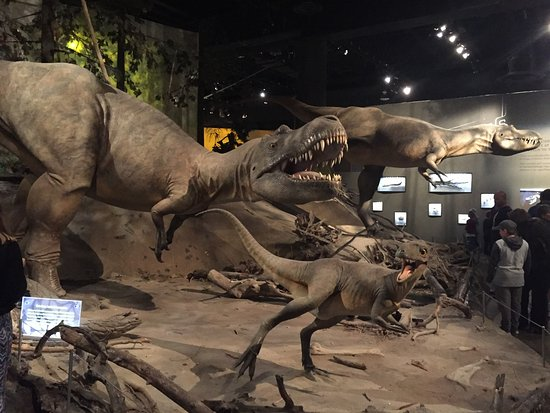 Royal Tyrrell Museum of Palaeontology: From bones to models - you see the dinosaurs come to life!