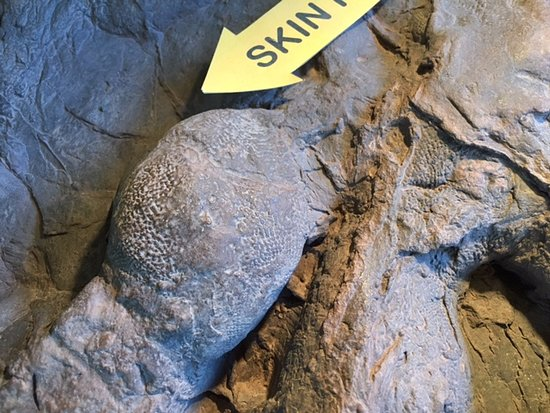 St. George, UT: Detailed skin impressions from a Eubrontes footprint, likely made by a large Dilophosaurus