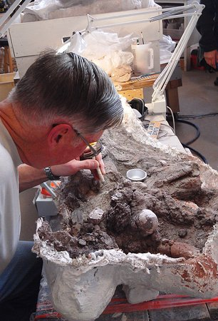 St. George, UT: Active fossil prep lab housed inside the museum.
