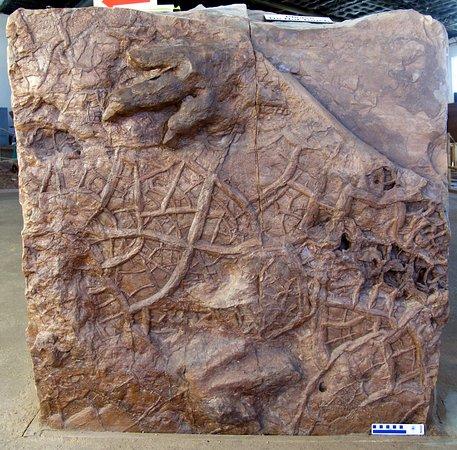 Saint George, UT: Eubrontes footprints and mudcracks.