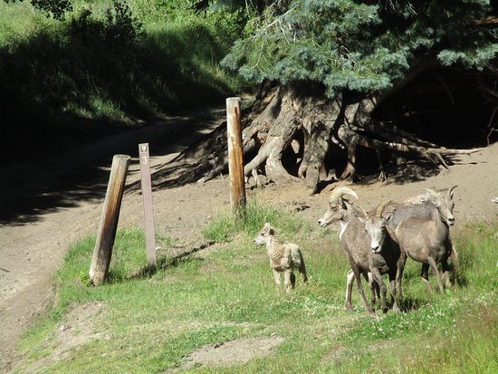 Mosca, CO : heard of mountain goats on the trail in the preserve