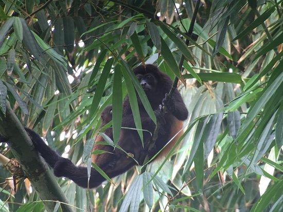 Osa Peninsula, Costa Rica: Monkey with her baby