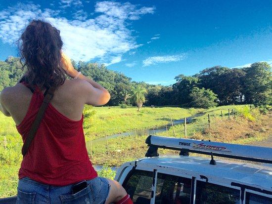Osa Peninsula, Costa Rica: Bird watching!