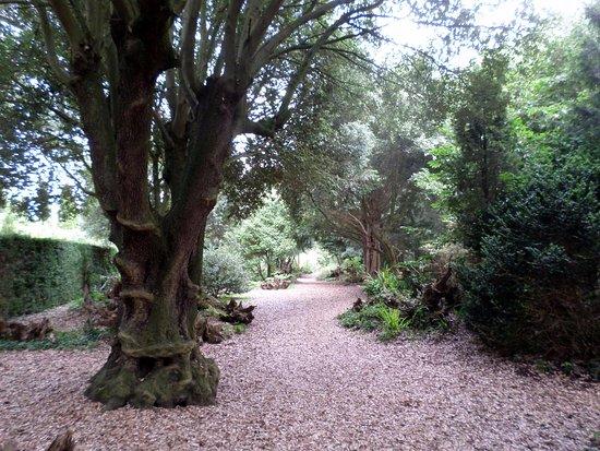 Horringer, UK: Some of the unusual gardens, Ickworth