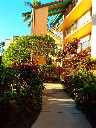 Maui Schooner Resort: lush landscaping