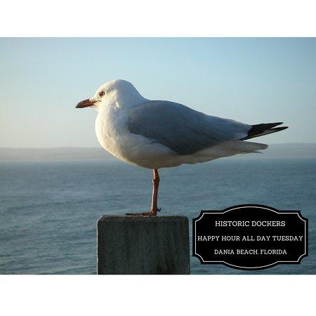Dania Beach, FL: Seagull at Historic Dockers