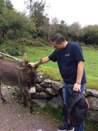 Kenmare, Irlanda: One of the donkeys who greets you