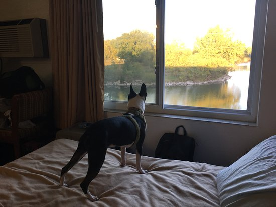 Grand Island, NE: Our dogs enjoyed the room and looking out the window at the lake