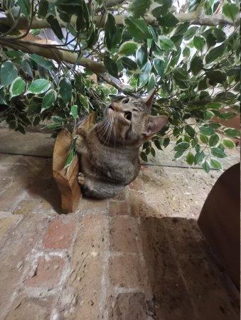 london cat village photo1 jpg