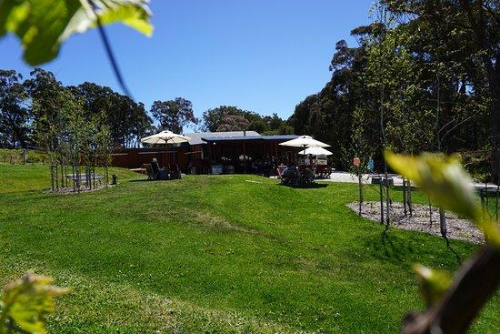 Mittagong, Australië: View from vineyard to cellar door.