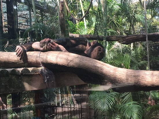 Kebun Raya dan Kebun Binatang Rockhampton: photo1.jpg
