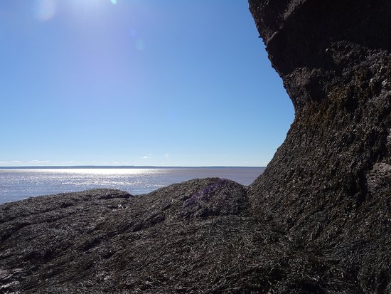Hopewell Cape, Canadá: Beautiful day to enjoy this incredible wonder!