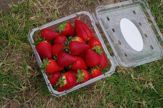 Kareelah Berry Farm 사진