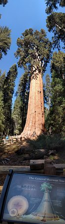 Three Rivers, Kalifornien: General Sherman