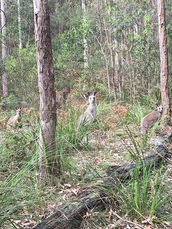 Tathra, Avustralya: photo0.jpg