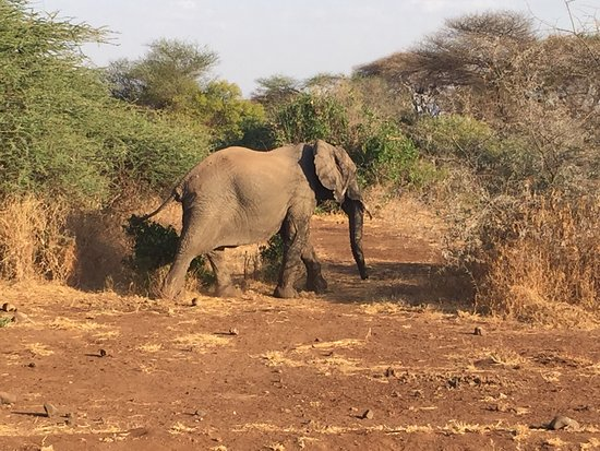 Arusha Region, Τανζανία: Serengeti National Park