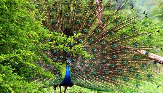 Tangalle, Sri Lanka: 1357718747_1_-_Udawalawe_National_Park_3_large.jpg