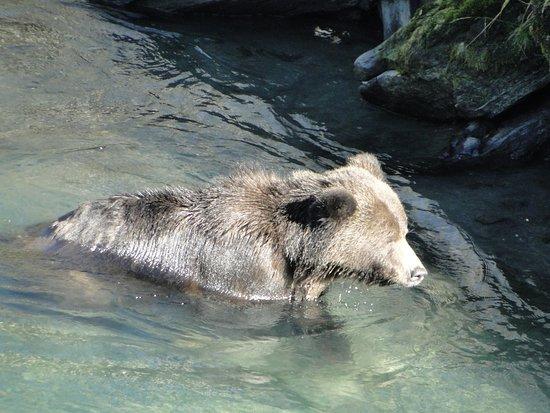 Aboriginal Journeys Wildlife and Adventure Tours: Im Wasser unter der Brücke
