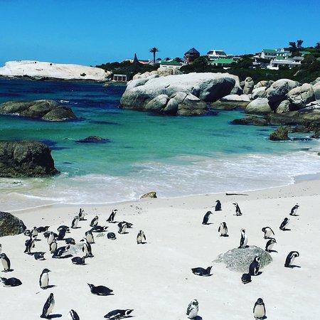 Κέιπ Τάουν, Νότια Αφρική: Two Oceans Cape Tours
