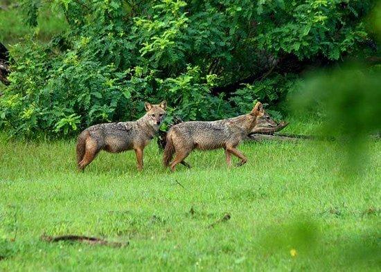 Tangalle, Sri Lanka: Udawalawa National park