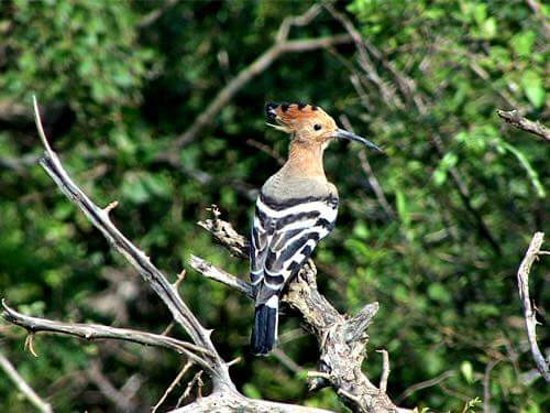 Tangalle, Sri Lanka : bird sanctuary kalametiya