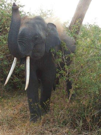 Tangalle, Sri Lanka: Elephant