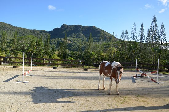 Tamarin: Horses from South Africa will take you for a ride in the heart of Ferney Valley.
