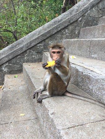 دامبولا, سريلانكا: photo4.jpg