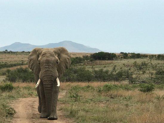 Ladysmith, Republika Południowej Afryki: Nambiti Hills Private Game Lodge