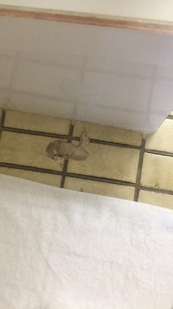 Raymond Terrace, Austrália: Filthy floor had to put towel down