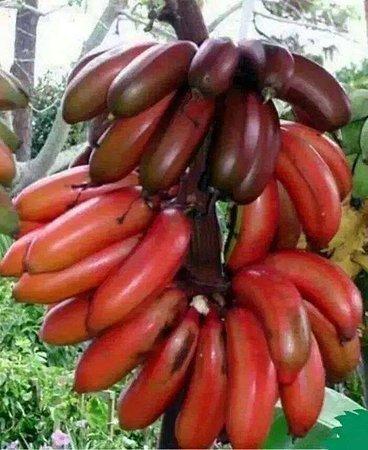 Província do Oeste, Sri Lanka: Banana
