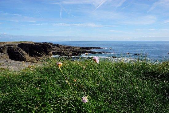 Fethard On Sea, Irland: photo3.jpg