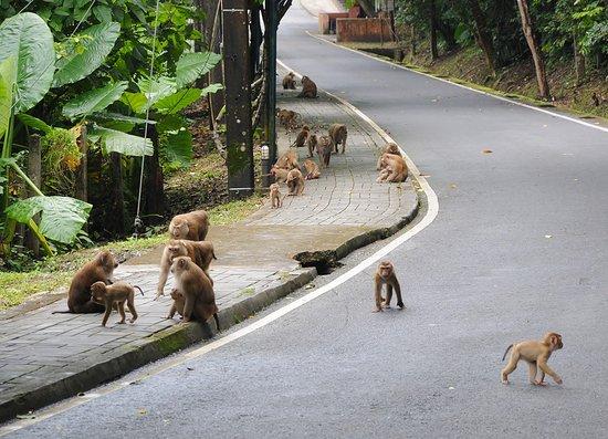 تل القرود من الاماكن السياحية في بوكيت