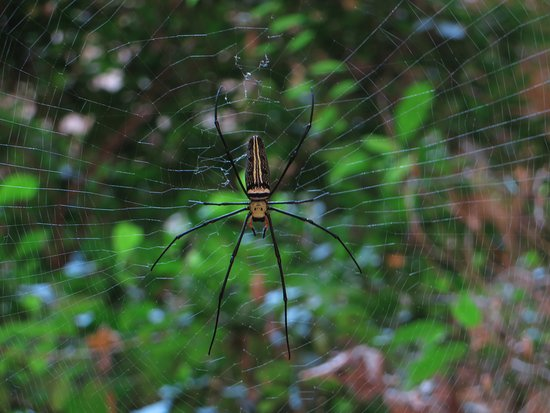 Sam Roi Yot, Thailand: eine große Spinne in der Höhle