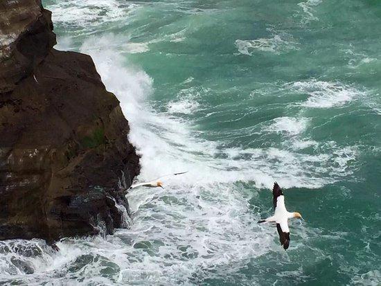 Muriwai Beach, نيوزيلندا: photo1.jpg