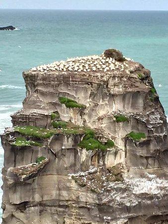 Muriwai Beach, نيوزيلندا: photo2.jpg