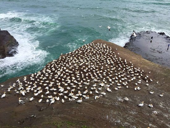Muriwai Beach, Nueva Zelanda: photo3.jpg