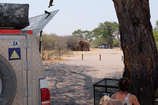 Camp Savuti: photo1.jpg