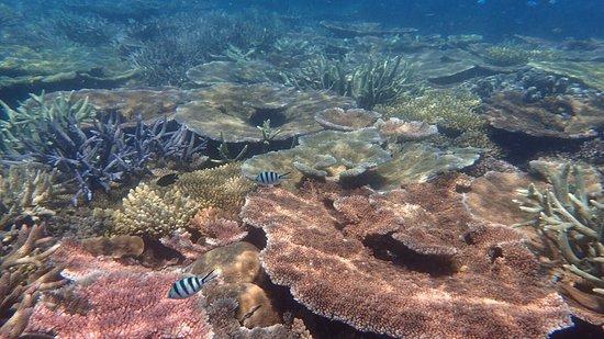 Mission Beach, Avustralya: Mooie tour op het water. 42 km uit de kust een mooie plek voor snorkelen. Mooiste koraal wat ik