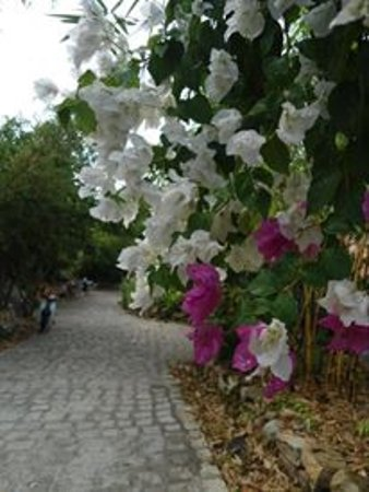 Ninh Phuoc Photo