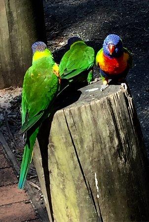 Shoalhaven, Australien: Paradise!