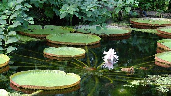 Botanische Tuin Rotterdam : Tropische tuin met vlinders en bijzondere bloemen foto van