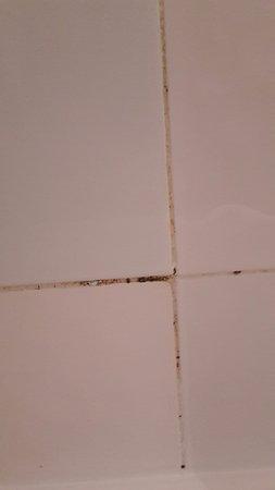 schimmel in de badkamer, spijtig - Foto van IFA Interclub Atlantic ...