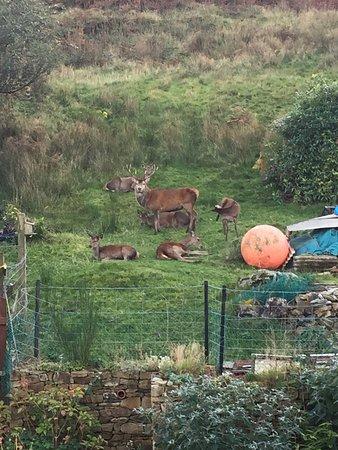 Lochranza, UK: photo2.jpg
