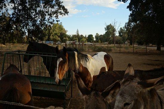 Sanger, Californie : Centerville Fruit Station, le hara