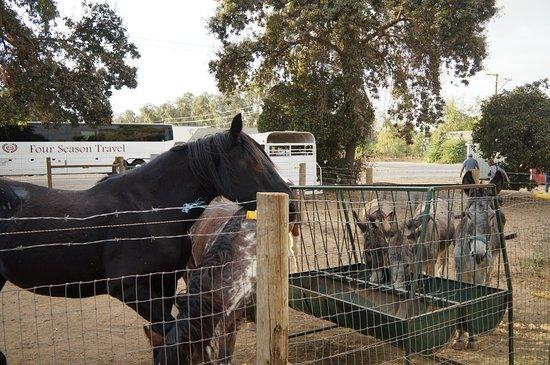 Sanger, Kaliforniya: Centerville Fruit Station, le hara