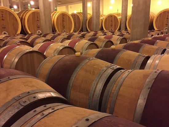 Montalcino, إيطاليا: Wine cellar