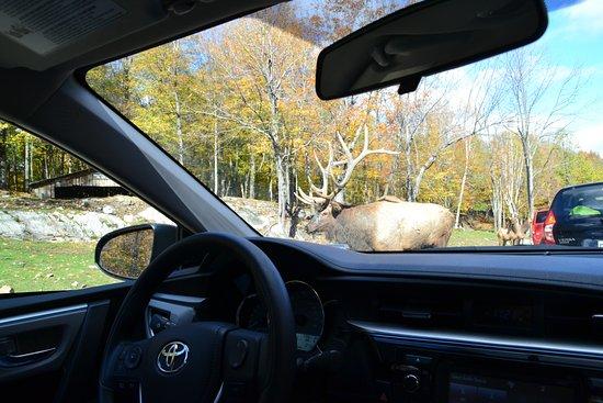 """Montebello, Kanada: Des animaux """"accessibles"""""""